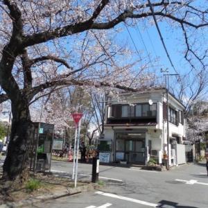 下町めぐり ➂谷中霊園の桜並木から上野桜木へ