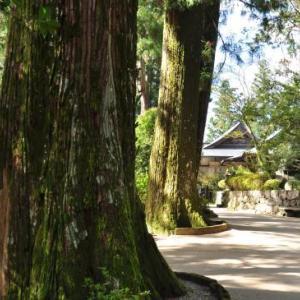 四国路ラストラン 9日目-① 一に焼山・二にお鶴の鶴林寺へ
