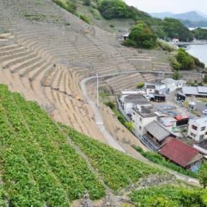 四国路ラストラン 14日目-④ 40番札所・観自在寺から段畑をまわり、宇和島で鯛めしを食べるはずだったのに・・・
