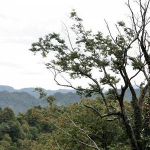 紅葉と出湯 ⑦ 六十里越えし、栃尾の油揚げを食す