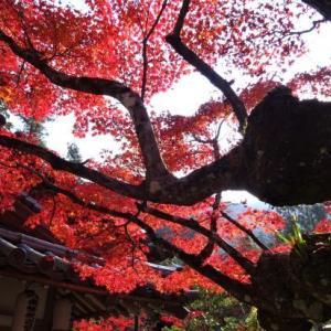 宮島でヨイショ ⑦ 大聖院境内の紅葉