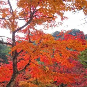 宮島でヨイショ ⑩ 紅葉谷公園から五重塔・千畳閣へ