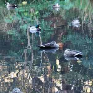 公園の水鳥たち