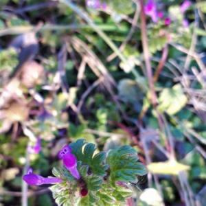 野辺の草花