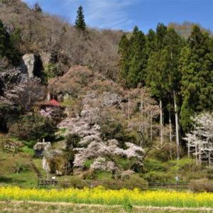桜狩り 2日目 ②岩観音というのも桜の名所???
