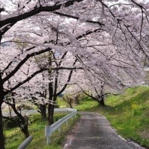 桜狩り 2日目 ⑤上杉神社へ