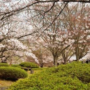 桜狩り 3日目 ⑤長井の街並み散歩と白ツツジ公園