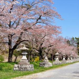 桜狩り 4日目 ➂中村城跡