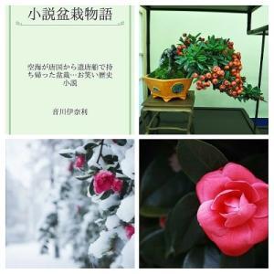 小説盆栽物語 7話 椿の盆景が明懸尼寺を再興させた