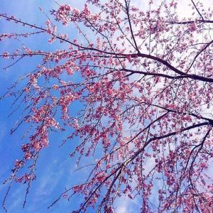 地元の神社に花詣で