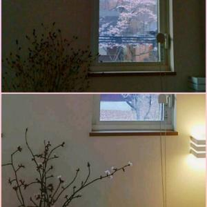 桜 借景とリユース