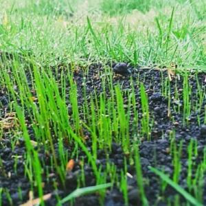 草刈りと活かすもの