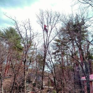 木の伐採とガーデニング