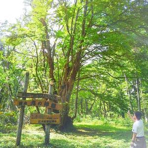 北海道 森の巨人たち