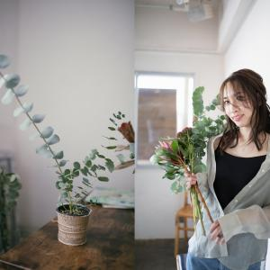 自宅の一角を写真スポットに♡大苗のユーカリ「ベイビーブルー」