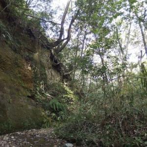 上神谷・美木多の残土埋め立て開発を考える集い・実行委員会からのお知らせ