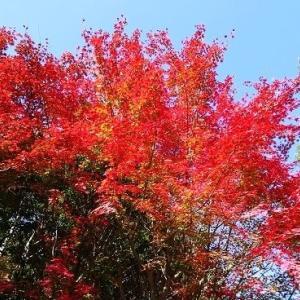 城山台辺りの紅葉