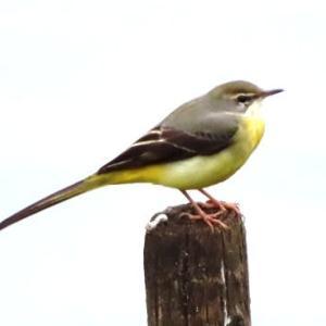 千里北公園~自然観察ネタ探し~続き