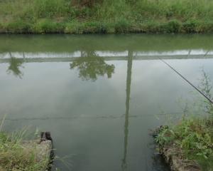 久しぶりに近所の用水路で小物釣り