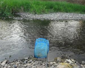 滋賀 2018年8月 真野川でのコアユ釣り