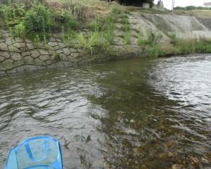 滋賀 和邇川で小鮎釣り 2019