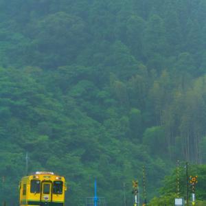 梅雨の黄色い列車
