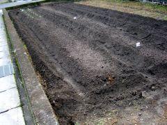 冬野菜の植え付け2021