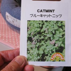 猫に安心植物キャットニップ