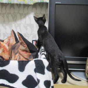 2にゃんのズートのお家&猫と一緒住む事が条件ハウス