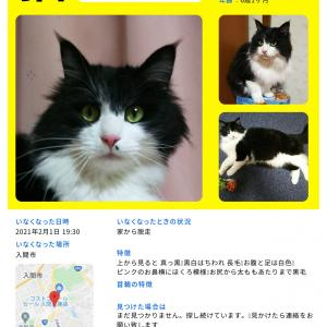 【迷子猫ジジくん探してます】埼玉県入間