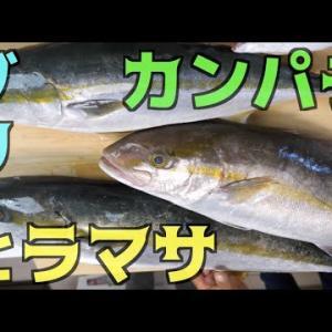 ブリ・ヒラマサ・カンパチ3種の中で一番美味しいのは・・・【釣りよかでしょう。】