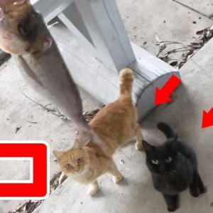 キャンプ場で魚を捌いていたら猫が…【釣りいろは】