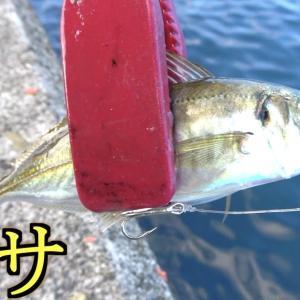堤防からは釣れないような魚を遂に仕留めた!!【釣りよかでしょう。】