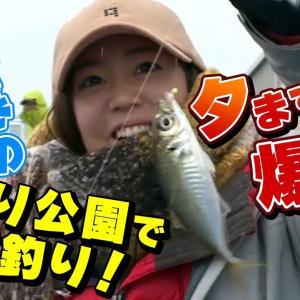 GO!GO!九ちゃんフィッシング #354『視聴者が海づり公園でアジ連発!?冬の堤防でサビキ&泳がせ釣り』