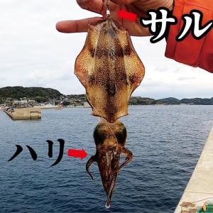 【サルカンの泳がせ】足を踏み入れた堤防は幾度となく大物が釣れる!【釣りスギ四平】