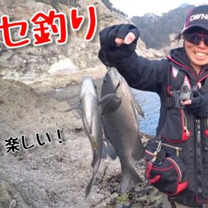 【五島列島】真冬の磯釣り聖地に上陸したら大忙し入れ食いだった!【釣りみにまにも】