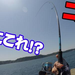 泳がせ用の魚釣ろうとしたら予想外の魚が来てパニックになった!【釣りせんば】