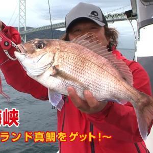 明石海峡でタイラバゲーム 高級ブランド真鯛をゲット!【四季の釣り】