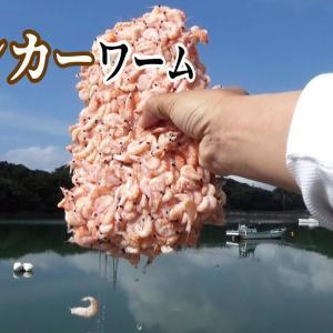 今!海辺で釣れるタマちゃんに大物を寄せるバンカーワームが激アツ!!【釣りスギ四平】