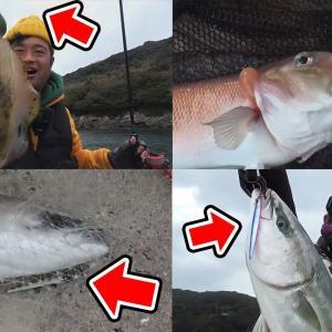 複数紹介!!コスパの良い釣り具【釣りいろは】
