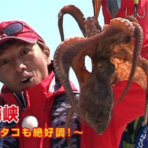 明石海峡でリレー釣り 青物もタコも絶好調!【四季の釣り】