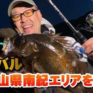 尺メバル・和歌山県南紀エリアを攻略!【釣り時季】