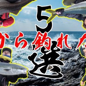 磯から釣れた巨大魚5選!【釣りよかでしょう。】