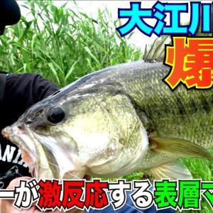 【バス釣り】大江川水系で爆釣!アフターが激反応する表層マジック!(大江川:大矢貴輝)【ジークラック】