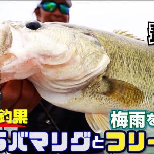 【バス釣り】超安定釣果!梅雨を制するアラバマリグとフリーリグ(琵琶湖:ヤマピーガイド)【ジークラック】