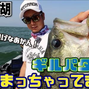 【バス釣り】ベローズギル投げなあかん!ギルパターン始まっちゃってます!(琵琶湖:UFOガイド)【ジークラック】
