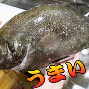 海の化石!シーラカンスですか?これ?硬すぎてさばきにくすぎる魚「うろこ」をばりばり食べる!【きまぐれクック】