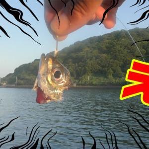 アジで泳がせ釣りしたら念願のあの高級魚が釣れた!?【釣りせんば】