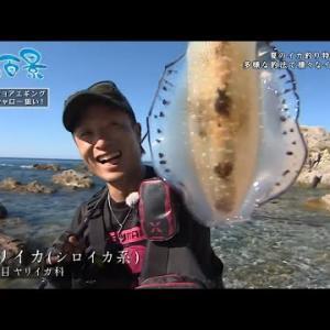 釣り百景 #342『夏のイカ釣り特集!多彩な釣法で様々なイカを狙う!』