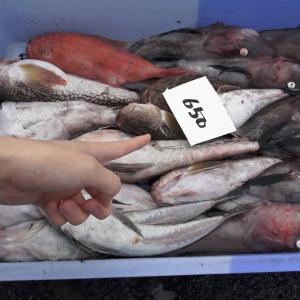 市場の片隅に『650円』でとんでもない魚しか入っていない魚セットが売られていたから即買い【きまぐれクック】